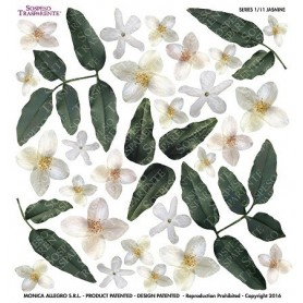 Pellicola stampata jasmine