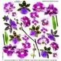 Pellicola stampata orchid fuchsia