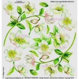 Pellicola stampata helleborus branch