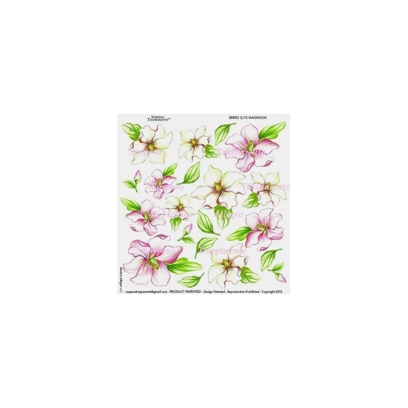 Pellicola stampata magnolia 2