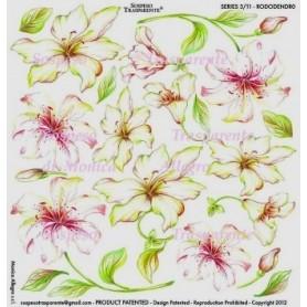 Pellicola stampata rododendro