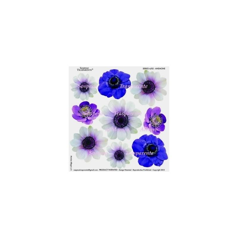 Pellicola stampata anemone