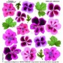 Pellicola stampata geranium