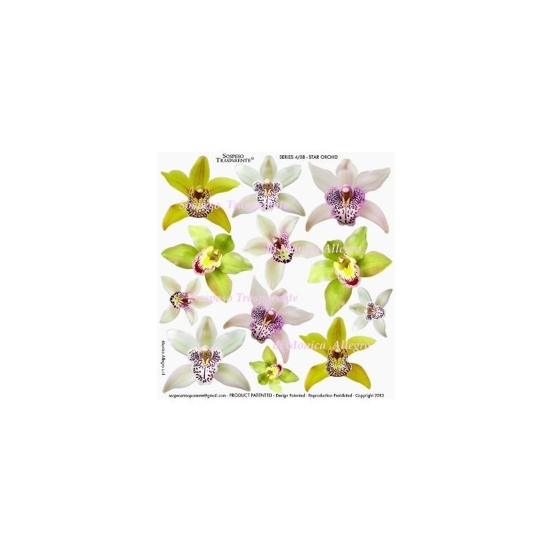 Pellicola stampata star orchid