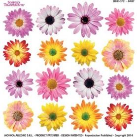 Pellicola stampata daisy 2