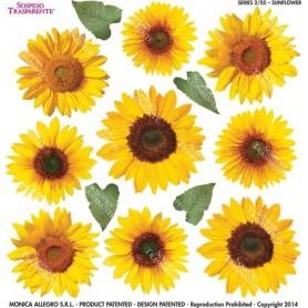 Pellicola stampata sunflower 2