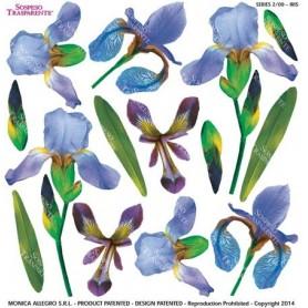 Pellicola stampata iris